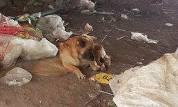 หมานอนเฝ้าคนเก็บของเก่าใต้สะพาน ตายมาแล้ว 2 สัปดาห์ ยังซื่อสัตย์แม้เจ้านายเป็นศพ
