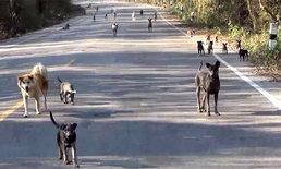 เกลื่อนถนน! สุนัขจรจัดถูกทิ้งริมทางกว่า 300 ตัว ปัญหาหนักเริ่มขาดน้ำ-อาหาร