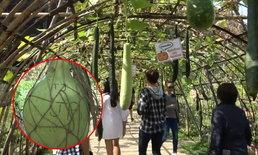 """ขอเถอะ! """"สวนพฤกษศาสตร์"""" วอนนักท่องเที่ยว """"เลิกขีดเขียนบนพืชผัก"""" (คลิป)"""