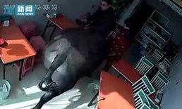 วัวกระทิงหนีโรงเชือด วิ่งเข้าร้านอาหาร ขวิดหญิงชุดแดงหวีดร้องเสียงหลง (คลิป)