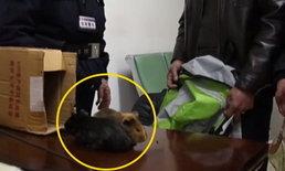 ตรุษจีน 2562: ตำรวจจีนรักษากฎหมาย แต่ยังถนอมน้ำใจผู้โดยสาร เอาหนูตะเภาขึ้นรถไฟ