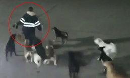 สลด หญิงโดนฝูงสุนัขจรจัดวิ่งไล่กัด ขย้ำหัวจนตาย ระหว่างเดินไปทำงาน