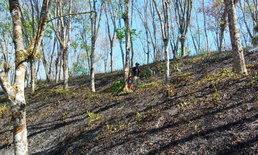 แล้งจัด! ไฟไหม้สวนยางวอดกว่า 10 ไร่ คาดต้นยางอาจล้มตายทั้งหมด