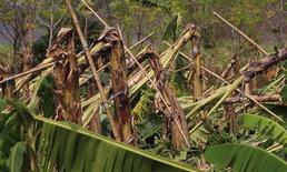 """""""พายุฤดูร้อน"""" ถล่มขอนแก่น สวนกล้วยหอมพังนับร้อยไร่ เสียหายกว่า 4 ล้านบาท"""