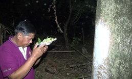 """ขนลุก! สาวแต่งชุดไทยเข้าฝันเจ้าของบ้าน วอนอย่าตัดกิ่ง """"ต้นมะขามยักษ์"""""""