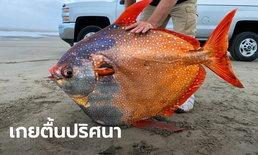 ปลามูนฟิช สัตว์น้ำลึกเขตร้อนขนาดยักษ์ เกยตื้นปริศนาบนหาดสหรัฐ