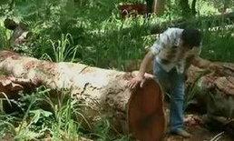 กรมป่าไม้เล็งแจ้งความเอาผิดขยายถนนขึ้นเขาใหญ่