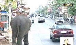 กทม.ห้ามนำช้างหากินในกทม.