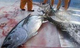 พ่อค้าปลาญี่ปุ่นประท้วงคำสั่งห้ามค้าปลาทูน่า