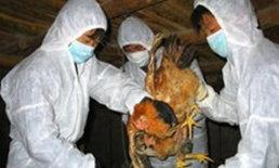จีนฆ่าไก่แล้ว 1.5 แสนตัว หลังพบไข้หวัดนก