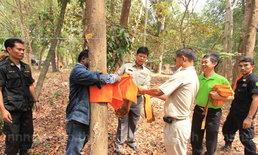 บวชป่าต่อชะตาไม้พะยูงแห่งแรกของไทย