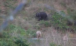 การบินหา ช้างเผือก ยังคว้าน้ำเหลว