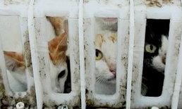 หวิดถูกเปิบ! ตร.ภ.4 จับขบวนการค้าแมวข้ามชาติ ร่วม 90 ตัว