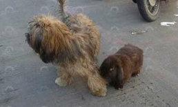 ฮือฮา กระต่ายชอบฟังสวดมนต์ มีสุนัขไปไหนไปด้วยกัน