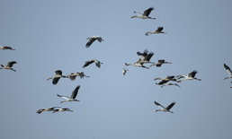 กรมอุทยานฯสั่งรับมือH7N9ในนกอพยพ