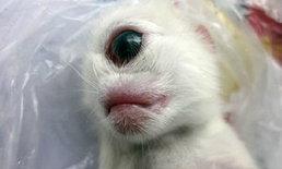 """ฮือฮา! พบ """"ลูกแมวตาเดียว"""" ไร้จมูก ที่จีน"""