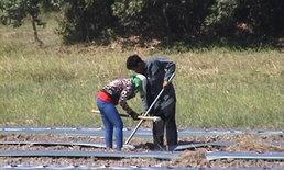 เกษตรกรจันทบุรี หันมาปลูกผักแทน