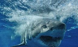 ฉลามกัดชาวประมงดับ นอกชายฝั่งฮาวาย