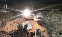 สวนสัตว์โคราชหาวิธีคลายหนาวเย็นให้สัตว์