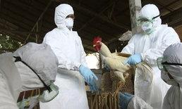 สธ.เตือนไข้หวัดนกในไทยอาจมีอาการแทรกซ้อนร่วม