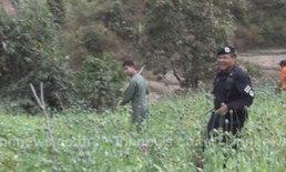 ทหารทำลายไร่ฝิ่น300ไร่ที่ชายแดนไทย-พม่า