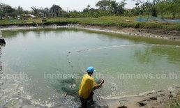 ผู้เลี้ยงปลาโคราชจับปลาขายหลังน้ำแห้งขอด