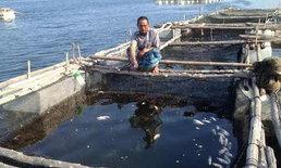 เกษตรกรเลี้ยงปลาในกระชังจ.กระบี่เดือดร้อนหนัก