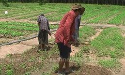 พิษภัยแล้งจันทรบุรีทำราคาผักพุ่งเป็นเท่าตัว