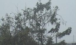 อุตุฯ เตือน พายุฤดูร้อนและคลื่นลมแรง ฉ.4