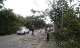 ฝกตกหนักพัดต้นไม้ล้มขวางถนนสายเอเชีย
