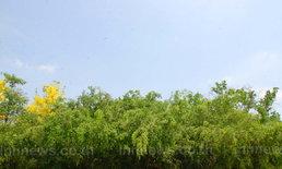 UNSEEN ต้นไทร วัดตาปะขาวหาย เมืองสองแคว