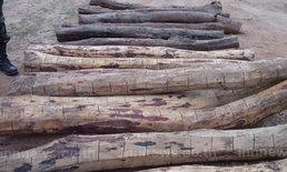 นอภ.อุบลนำป่าไม้ยึดพะยูง45ท่อนค่า1.5ล.