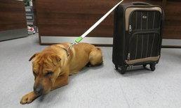 """พบผู้ทิ้ง """"ไค"""" สุนัขพันธุ์ชาเป่ยผสมที่ถูกทิ้งไว้ที่สถานีรถไฟในสกอตแลนด์"""