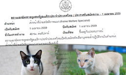 """ชาวเน็ตฉงน? สถานทูตอเมริกาที่ไทย รับสมัคร """"จนท.สวัสดิภาพแมว"""""""