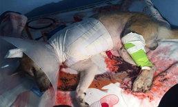 นักข่าวช่อง 3 โพสต์สะเทือนใจ หมาชิบะถูกทำร้าย-ตัดขาขาด