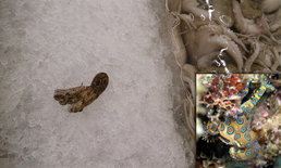 แชร์ว่อน! หมึกพิษถึงตาย ปนอยู่แผนกอาหารทะเลห้างดัง