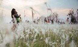 เตือนคนแห่ถ่ายรูปทุ่งดอกหญ้า ระวังแพ้เกสร