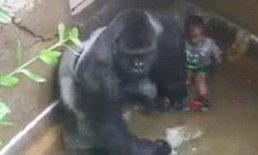 หลักฐานจากภาพวีดีโอชี้ กอริลล่า ไม่ได้ทำร้ายเด็ก