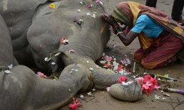 ชาวบ้านอินเดียสวดมนต์ให้ช้างที่ถูกไฟดูดตาย