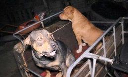 คุณยายวัย 82 ปี ถูกสุนัข 4 ตัว รุมกัดเสียชีวิต