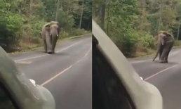 หน.อุทยานฯ เขาใหญ่ แจ้งจับเก๋งคัมรี่พิเรนทร์แกล้งช้างป่า