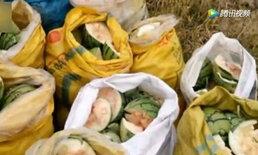 4 เด็กจีนสุดแสบ บุกกระทืบแตงโมชาวไร่ เสียหายกว่า 4,500 กก.