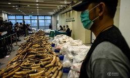 ฮ่องกงจับลักลอบขนงาช้างครั้งใหญ่สุดในรอบ 30 ปี มูลค่ากว่า 300 ล้าน