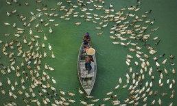 ภาพชวนทึ่ง เป็ดเบงกอลนับร้อยรายล้อมรอบเรือ รอกินอาหาร
