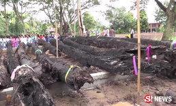 ชาวบ้านจ้างแบคโฮขุดตะเคียน 20 ต้นขึ้นน้ำ หลังถูกหวยเกือบทั้งหมู่บ้าน