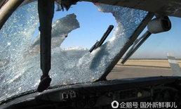 นกเหยี่ยวบินชนสายการบินดัง ทะลุห้องนักบิน จำเป็นต้องวนกลับ