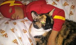 Catman ซูเปอร์ฮีโร่ใจบุญตัวจิ๋ว ผู้พิทักษ์แมวจรจัดในสหรัฐ