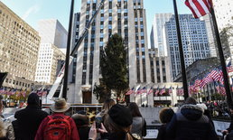 อลังการ! นิวยอร์กติดตั้งต้นคริสต์มาสยักษ์ประจำปีนี้แล้ว
