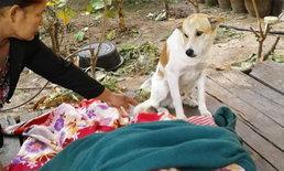 หนุ่มนอนหนาวตายบนเตียงข้างบ้าน สุนัขแสนรู้นั่งเฝ้าร่างทั้งคืน