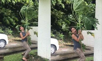ชาวเน็ตเอาใจช่วย สาวปกป้องต้นมะละกอจากไต้ฝุ่นลัง
